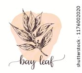 bay leaf hand drawn ink... | Shutterstock .eps vector #1176002020