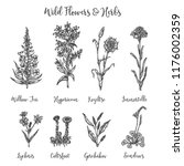 herbs and wild flowers. drawing ... | Shutterstock . vector #1176002359