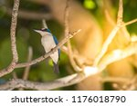 bird  collared kingfisher ... | Shutterstock . vector #1176018790