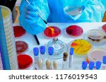 petri dish. microbiological... | Shutterstock . vector #1176019543