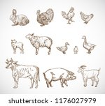 hand drawn domestic animals set.... | Shutterstock .eps vector #1176027979