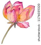 Stock photo watercolor pink lotus flower floral botanical flower isolated illustration element aquarelle 1176035320