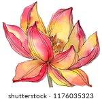 watercolor orange lotus flower. ...   Shutterstock . vector #1176035323