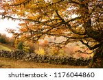 hiking during the autumn... | Shutterstock . vector #1176044860