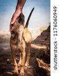 a little affectionate puppy... | Shutterstock . vector #1176060949