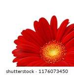 Close Up Of Red Gerbera Petals...