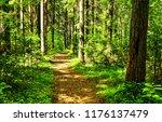forest path landscape. deep... | Shutterstock . vector #1176137479