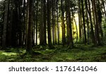 shadows and sunbeams in the... | Shutterstock . vector #1176141046