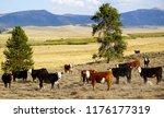 landscape with herd of cows in...   Shutterstock . vector #1176177319