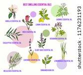 best smelling essential oils.... | Shutterstock .eps vector #1176231193