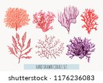 beautiful hand drawn botanical... | Shutterstock .eps vector #1176236083