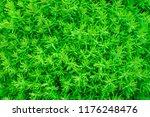 green background. grass heather | Shutterstock . vector #1176248476