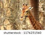 a beautiful portrait of a... | Shutterstock . vector #1176251560