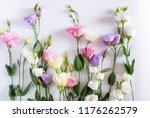 Beautiful Eustoma Flower...