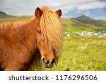faroe pony on a summer meadow  ...   Shutterstock . vector #1176296506