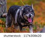 hunting dog seeking prey in the ... | Shutterstock . vector #1176308620