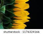 Closeup Sunflower On A Dark...