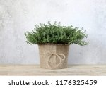 thyme in a pot on a wooden... | Shutterstock . vector #1176325459
