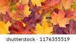 colorful background of autumn... | Shutterstock . vector #1176355519