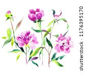 watercolor botanical drawing... | Shutterstock . vector #1176395170