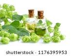 fresh green hop branch  humulus ... | Shutterstock . vector #1176395953