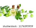 fresh green hop branch  humulus ... | Shutterstock . vector #1176395959