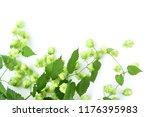 fresh green hop branch  humulus ... | Shutterstock . vector #1176395983