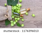 fresh green hops  humulus  in... | Shutterstock . vector #1176396013