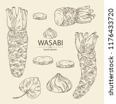 collection of wasabi  root ... | Shutterstock .eps vector #1176433720