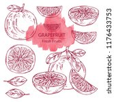 collection of grapefruit and... | Shutterstock .eps vector #1176433753