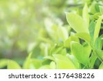 nature fresh green leaf plant... | Shutterstock . vector #1176438226