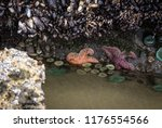 A Pink And Purple Starfish In ...