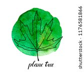Vector Leaf Of Plane Tree At...