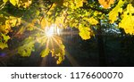 autumn in the deciduous forest | Shutterstock . vector #1176600070