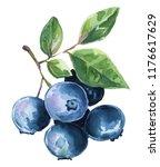 watercolor illustration... | Shutterstock . vector #1176617629