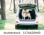 a friendly dog retriver is...   Shutterstock . vector #1176620443