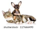 Stock photo the puppy lies on a striped cat looking at camera isolated on white background 117666490
