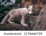 beautiful wild animal in the... | Shutterstock . vector #1176666739