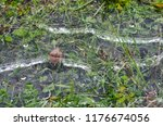 frozen puddle with air bubbles... | Shutterstock . vector #1176674056