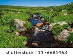 bushes of kuril tea grows near... | Shutterstock . vector #1176681463