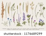 summertime. plants of fields... | Shutterstock .eps vector #1176689299