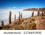 cactuses in incahuasi island ...   Shutterstock . vector #1176691900