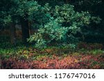 leaves of oak tree in summer. | Shutterstock . vector #1176747016