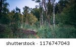 forest in summer with different ... | Shutterstock . vector #1176747043