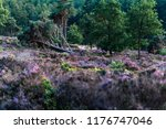 fallen pine tree in blooming... | Shutterstock . vector #1176747046