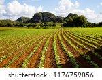 tabacco fields in vinales cuba | Shutterstock . vector #1176759856
