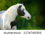 Pinto Horse Close Up Portrait