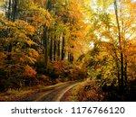 beech trees forest at autumn  ... | Shutterstock . vector #1176766120