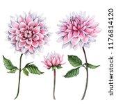 Watercolor Set Of Dahlia...