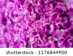 purple flowers on white wall | Shutterstock . vector #1176844900